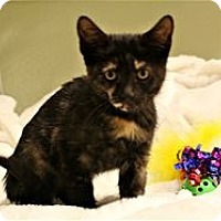 Adopt A Pet :: Cashmere - Lincoln, CA