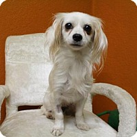 Adopt A Pet :: Bella - Windsor, CA
