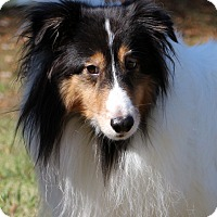 Adopt A Pet :: Butter~meet me~New pics! - Glastonbury, CT