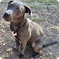 Adopt A Pet :: Skylar - Topeka, KS