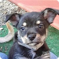 Adopt A Pet :: Bayou - Oakley, CA