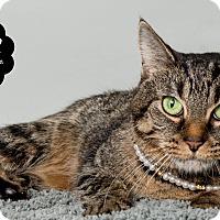 Adopt A Pet :: Tyler - Wyandotte, MI