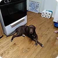 Adopt A Pet :: Delilah - New Braunfels, TX