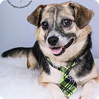 Adopt A Pet :: Banjo - Cincinnati, OH
