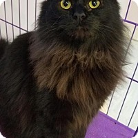 Adopt A Pet :: Daisy WITH VIDEO!!!!!!! Part of a Bonded Pair!! - Akron, OH