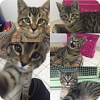 Adopt A Pet :: cousin eddie - Bryan, OH