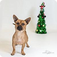 Adopt A Pet :: Chico - Naperville, IL