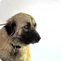 Adopt A Pet :: Mimi - Goodyear, AZ