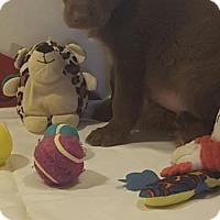 Adopt A Pet :: Bubba - Vacaville, CA