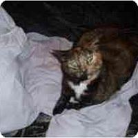 Adopt A Pet :: Kitty Lee - Hamburg, NY