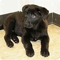Adopt A Pet :: Kane - Racine, WI