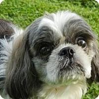 Adopt A Pet :: Galileo - Seymour, CT