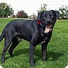 Adopt A Pet :: Titus