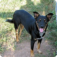Adopt A Pet :: Desi - Waller, TX
