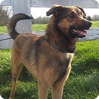 Adopt A Pet :: Avery - Louisville, KY