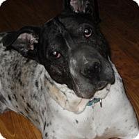 Adopt A Pet :: Bronx - Nashua, NH
