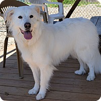 Adopt A Pet :: Ellie - Pacific, MO