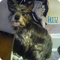 Adopt A Pet :: Fritz - House Springs, MO