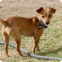 Adopt A Pet :: Peanut - Surprise, AZ