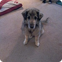 Adopt A Pet :: Gracie - Winchester, VA