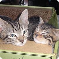 Adopt A Pet :: KITTY BUNDLE FLORETTE'14 - New York, NY