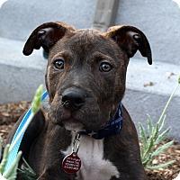 Adopt A Pet :: Goober - Los Angeles, CA