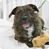 Adopt A Pet :: Ben Foster - Jersey City, NJ