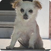 Adopt A Pet :: Paris - Bridgeton, MO