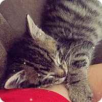 Adopt A Pet :: A388226- Kangaroo - San Antonio, TX