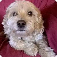 Adopt A Pet :: Jack - Campbell, CA