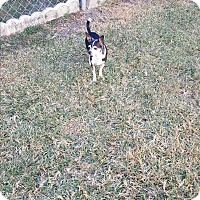 Chihuahua Dog for adoption in Palm Bay, Florida - Max