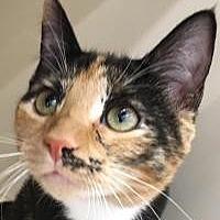 Adopt A Pet :: Harriet - Franklin, WV