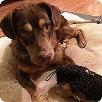 Adopt A Pet :: Capone - Fayetteville, GA