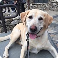 Adopt A Pet :: Sam - Waxhaw, NC