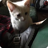 Adopt A Pet :: Fahrenheti - Chandler, AZ