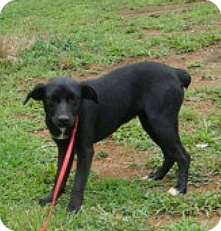 Miniature Pinscher Mix Dog for adoption in Washington, D.C. - Ebby