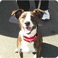 Adopt A Pet :: Cassy - Phoenix, AZ