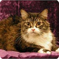 Adopt A Pet :: Kit Kat - Sacramento, CA
