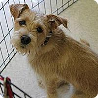 Adopt A Pet :: Sadie Belle - Phoenix, AZ