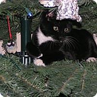 Adopt A Pet :: Bounce - Monroe, GA