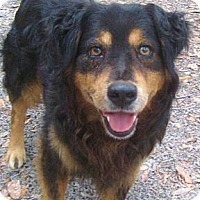 Adopt A Pet :: Buster Brown - Nokomis, FL
