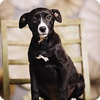 Adopt A Pet :: Cranberry - Portland, OR