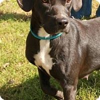 Adopt A Pet :: Anna Beth - Salem, NH