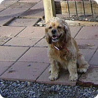 Adopt A Pet :: Betsy - Richmond, VA