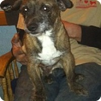 Adopt A Pet :: BooBoo Bear - Visalia, CA