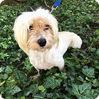 Adopt A Pet :: Estrella - Encino, CA