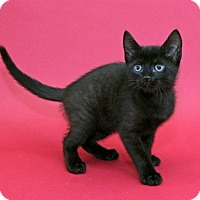 Adopt A Pet :: Cooper - Garland, TX