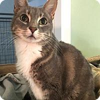 Adopt A Pet :: Sierra - Menifee, CA