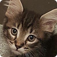Adopt A Pet :: Sundance - Jacksonville, FL