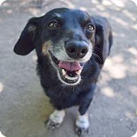 Adopt A Pet :: Argos - Prosser, WA